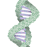 Growth genes icon